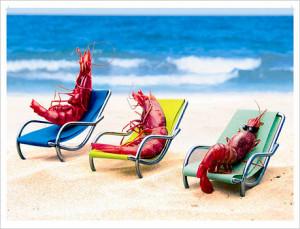 cangrejos tomando sol